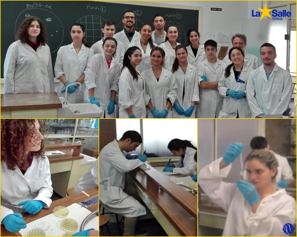 L'alumnat de biologia de batxillerat participa en un programa de recerca d'antibiòtics